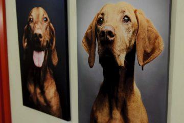animal photo acoustic elements (2)